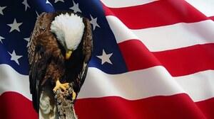 American Flag Bald Eagle Eagle Holiday Memorial Day 1600x1000 wallpaper