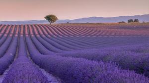Field Flower Landscape Lavender Purple Flower Summer Tree 2048x1171 Wallpaper