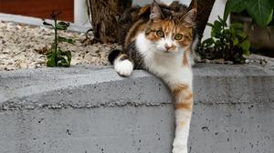 Cat Pet 2560x1653 Wallpaper