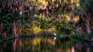 Nature Trees Pond Palm Trees Evening Birds 2080x1387 Wallpaper