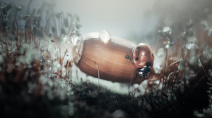 Ladybugs Insect Depth Of Field Dew Acorns Photography Outdoors Nature Vladlena Lapshina 2500x1666 Wallpaper