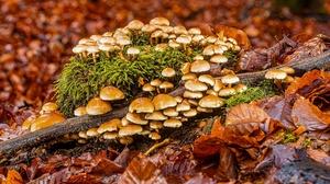 Foliage Moss Mushroom 3840x2160 Wallpaper