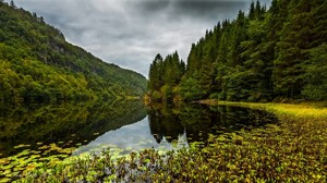 Water River Nature Forest Landscape Plants Outdoors Reflection Trees 1920x1080 Wallpaper