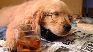 Baby Animal Dog Glasses Humor Pet Puppy Sleeping Tea 1920x1080 Wallpaper