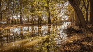 Fall Forest Nature Reflection Tree 2048x1365 wallpaper
