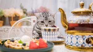 Cat Cup Pet 2048x1287 wallpaper