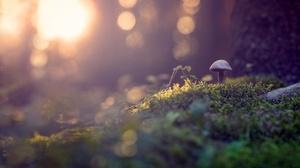 Bokeh Close Up Fall Moss Mushroom Nature 2560x1515 Wallpaper