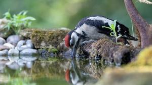 Water Bird Wildlife 3000x2000 Wallpaper