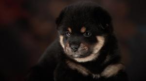 Dog Pet Baby Animal 3200x2133 Wallpaper