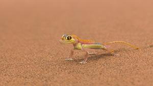 Lizard 1920x1200 Wallpaper