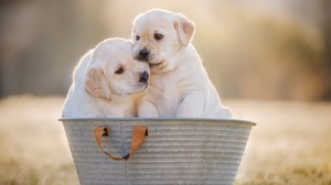 Dog Puppy Pet Baby Animal 2048x1363 Wallpaper
