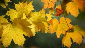 Fall Leaf Macro Maple Leaf 2048x1378 Wallpaper