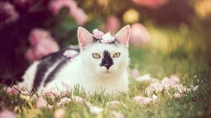 Cat Depth Of Field Pet Petal Stare 1920x1282 wallpaper