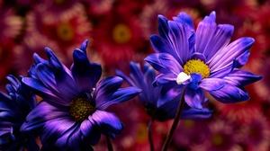 Flower Nature Purple Flower 2560x1709 Wallpaper
