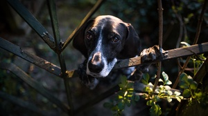 Dog Pet 5760x3375 Wallpaper