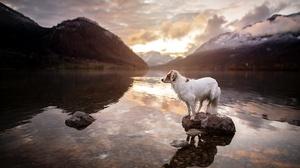 Dog Outdoors Nature Animals Mammals Sunlight Water Stones Mountains 3840x2160 Wallpaper