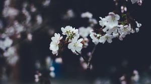 Flower White Flower 3840x2400 Wallpaper