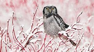Bird Owl Snow Wildlife Winter 2400x1600 Wallpaper