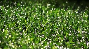 Bokeh Dew Drop Grass Green Macro 4752x3168 Wallpaper
