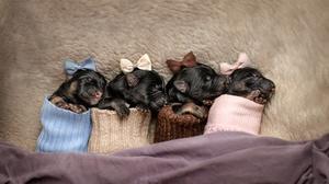 Baby Animal Dog Sleeping Pet 1989x1219 wallpaper
