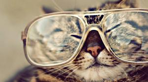 Cat Glasses 1920x1440 wallpaper