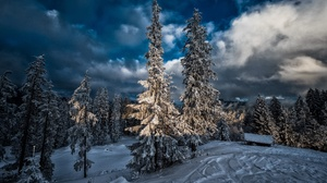 Winter Outdoors Snow Ice Nature Trees Clouds 2560x1703 Wallpaper