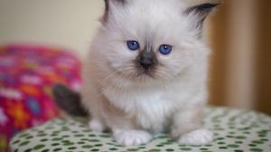 Baby Animal Cat Kitten Pet Stare 2143x1661 Wallpaper