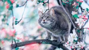 Blossom Cat Pet 1920x1280 Wallpaper