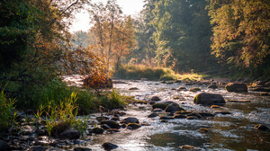 Stream Water Rocks Nature Plants Warm Trees Reeds Outdoors Photography Landscape 1824x1200 Wallpaper