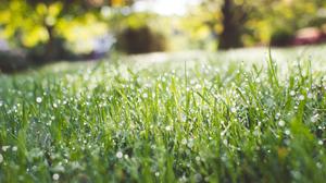 Depth Of Field Dew Drop Grass Greenery Nature 2500x1667 Wallpaper