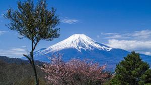 Cherry Blossom Cherry Tree Japan Mount Fuji Sakura Spring Summit Volcano 4301x2867 Wallpaper