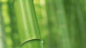 Earth Bamboo 1920x1440 Wallpaper