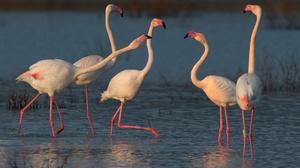 Bird Flamingo Wildlife 2400x1600 wallpaper