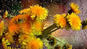Bouquet Dandelion Raindrops Yellow Flower 1920x1080 wallpaper