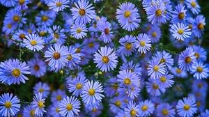 Blue Flower Daisy Flower Nature 2048x1222 Wallpaper