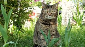Cat Grass Pet 2048x1365 Wallpaper
