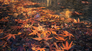 Nature Landscape Portrait Display Leaves Evgeni Fabisuk River Water Bridge Arch Fall Old Bridge Tree 1365x2048 Wallpaper