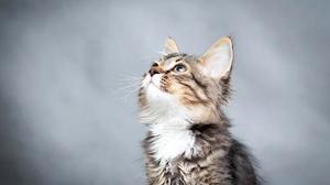 Cat Pet 2000x1333 wallpaper