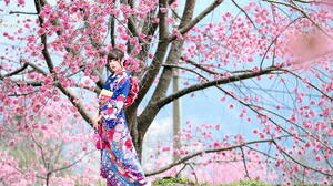 Asian Model Women Long Hair Brunette Traditional Clothing Cherry Blossom Hair Ornament Trees Grass 2281x1520 Wallpaper