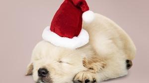 Dog Pet Baby Animal Puppy Santa Hat 5071x3804 Wallpaper