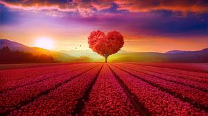 Field Flower Heart Shaped Sunset Tree 4300x2550 wallpaper