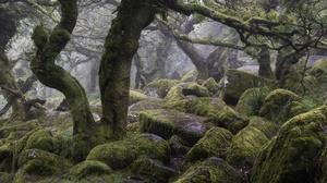 Fog Moss Stone Tree 6000x4000 Wallpaper