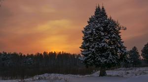 Evening Snow Spruce 3840x2160 Wallpaper