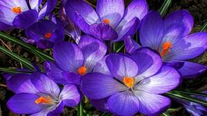Flower Purple Flower Nature 2560x1600 wallpaper