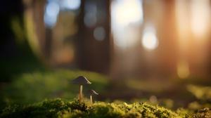 Depth Of Field Macro Moss Mushroom Nature 6000x4000 Wallpaper
