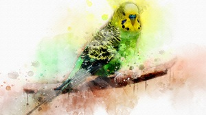 Watercolor Bird Parrot Artistic 3000x1999 Wallpaper