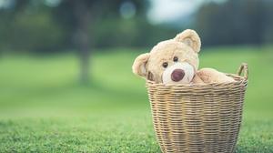 Basket Depth Of Field Stuffed Animal Teddy Bear 5472x3648 Wallpaper