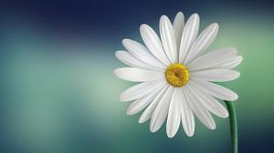 Flower White Flower 1980x1289 wallpaper