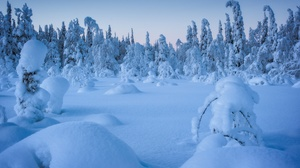 Winter Snow Cold Ice Nature Trees 2048x1367 Wallpaper
