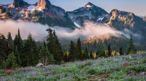 Fog Forest Lake Landscape Meadow Mountain National Park 6743x4500 Wallpaper